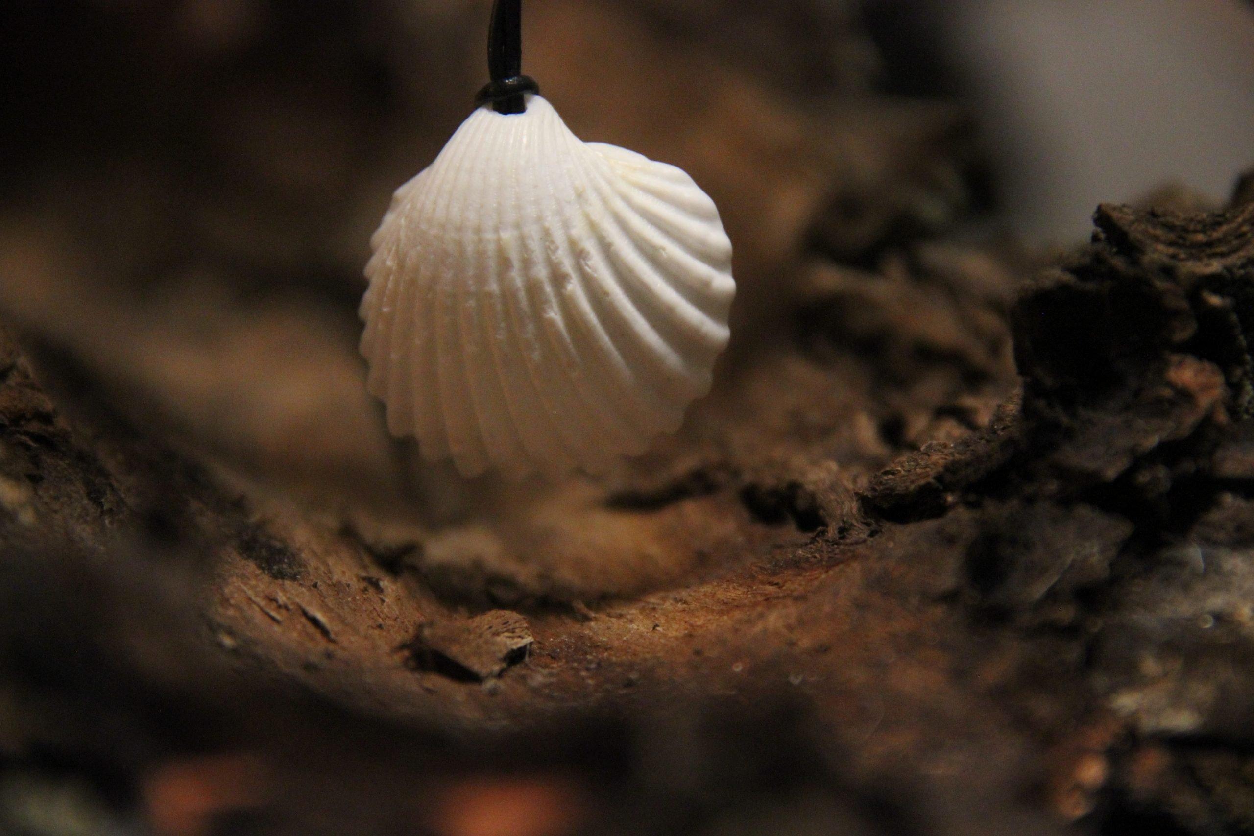 Herzmuschel Naturschmuck Muschel Strandmuschel handgemachtes selbstgemachtes Schmuck handmade unikat Lederband Rebecca Speth resp. Künstlerin weiß